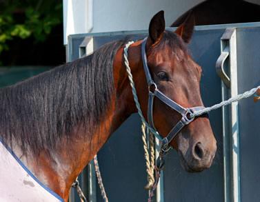 Transport de chevaux sur Béthune, Lens dans le Pas de Calais